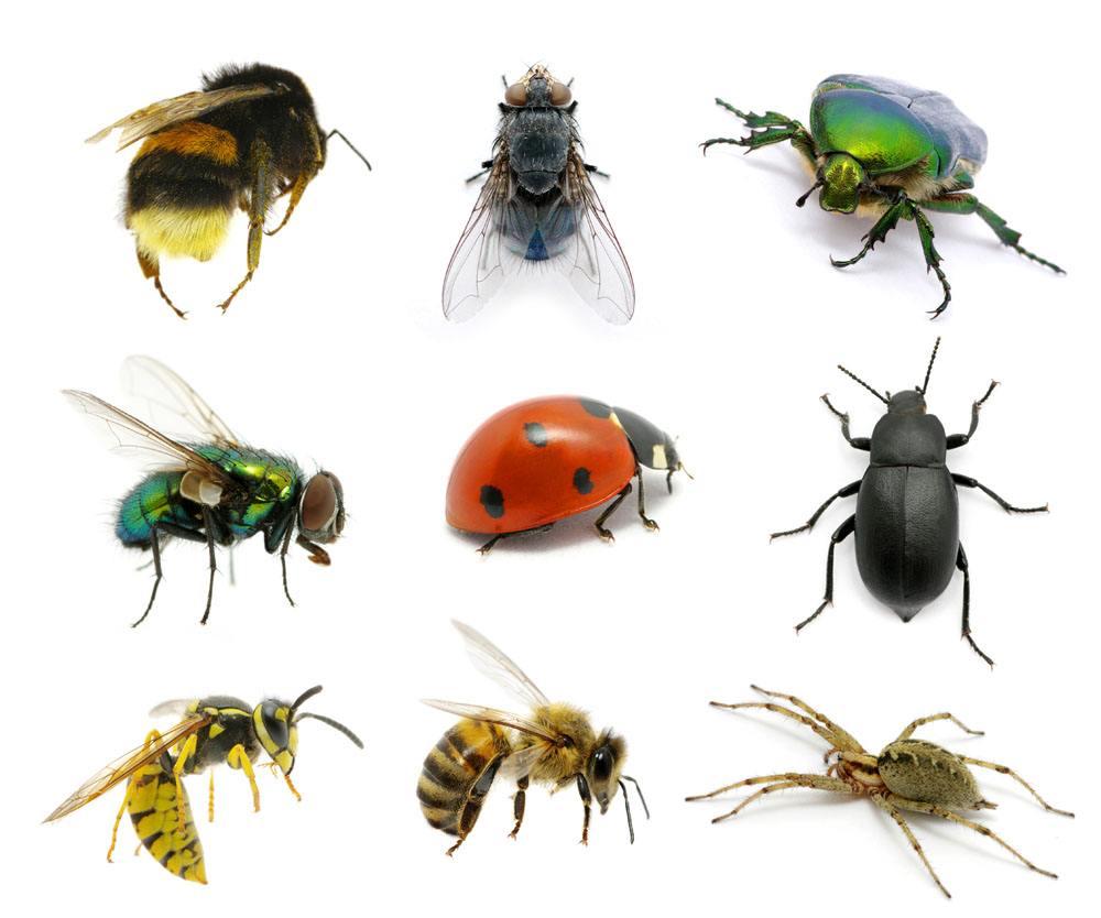 YUNBOSHI Entomology Dry Cabinets